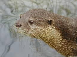 Otterly Wonderful
